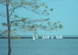 116 - a fleet of sails